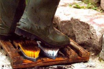 Решетка со щетками для чистки обуви