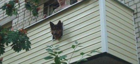 Окошко для собаки на балконе